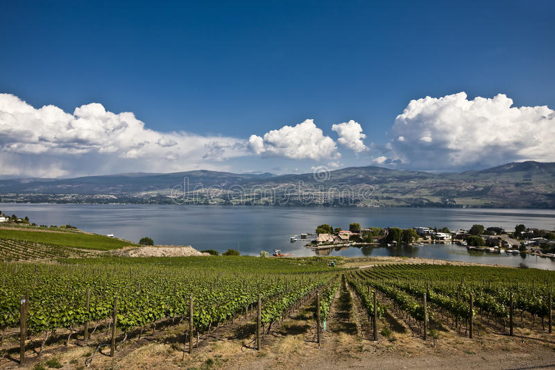 Download Vineyards stock photo. Image of grapevine, vineyard, scenes - 13047552