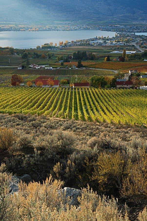 Vineyards Royalty Free Stock Image