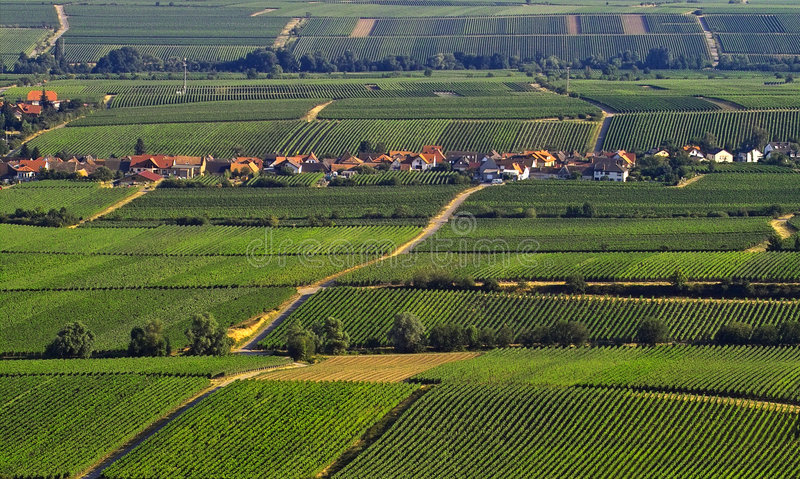 Download Vineyards stock image. Image of cloud, farming, houses - 200861