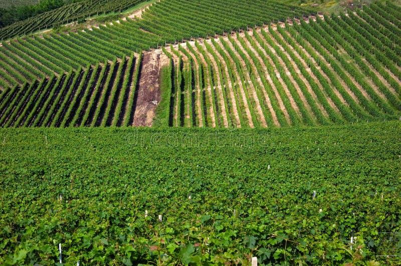 Vineyards stock photography