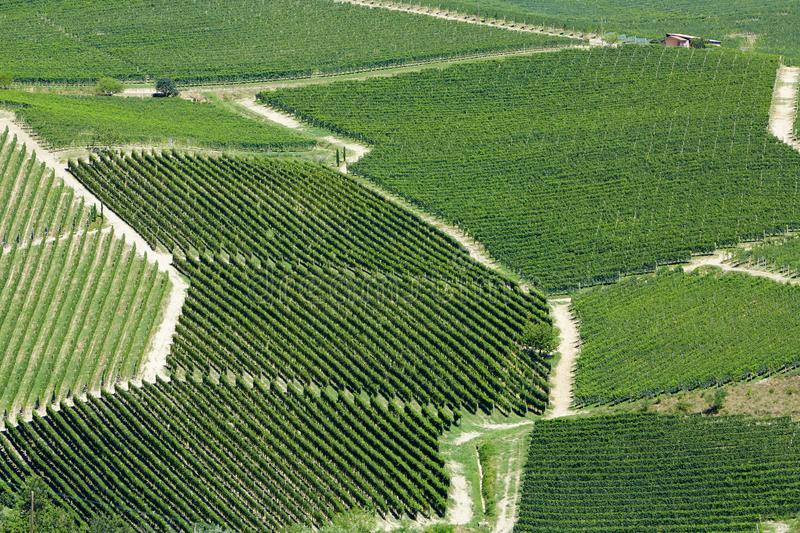 Vineyards aerial view in a sunny day in Piedmont, Italy royalty free stock image