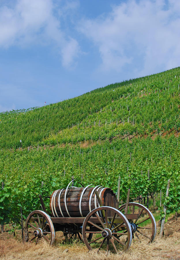 Download Vineyards In The Ahr Valley,Germany Stock Photo - Image: 23591258