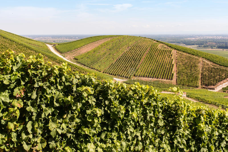Vineyards In Alsace, France Royalty Free Stock Photo