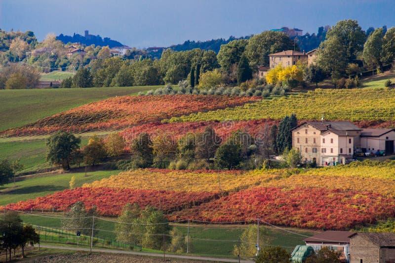 Rows of vine lambrusco autumn colors wine festival of grape royalty free stock photos