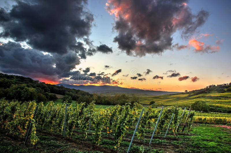 Vineyards in autumn. With deep grey and red clouds, red burning sky just after sunset. (Dahlenheim, Alsace, France stock images