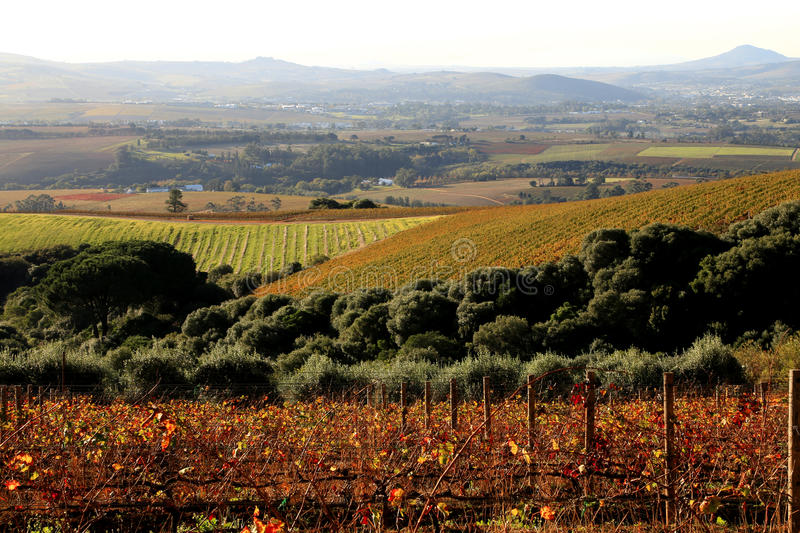 Vineyards in Autumn stock photos