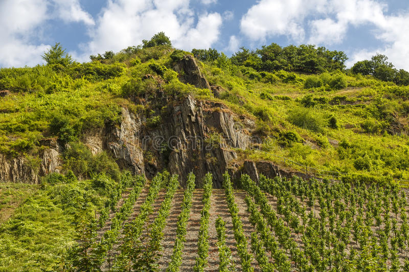Vineyards Beilstein stock images
