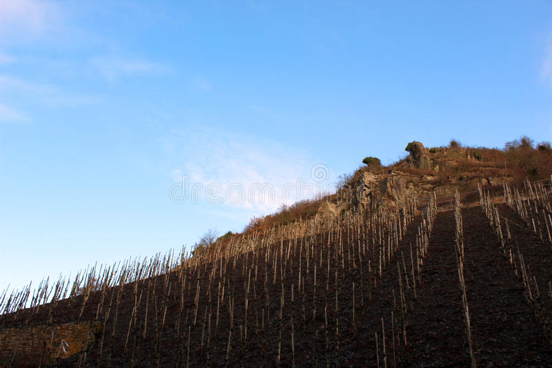 Vineyards at Beilstein, Germany stock images