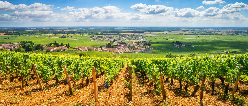 Vineyards of Burgundy, France royalty free stock photos