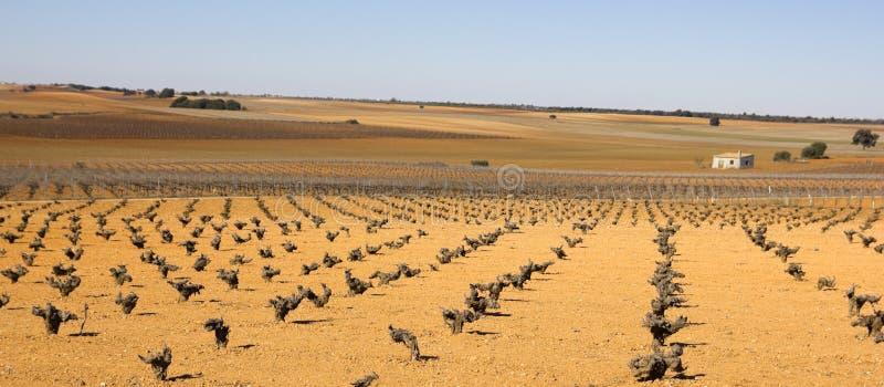 Vineyards in Castilla la Mancha, Spain. stock photo