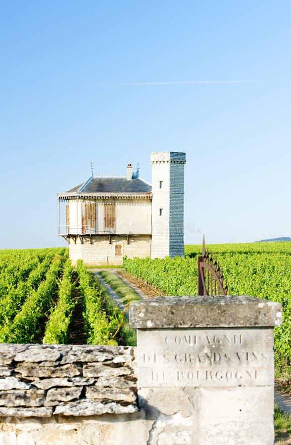 vineyards of Clos Blanc De Vougeot Castle, Burgundy, France stock photos