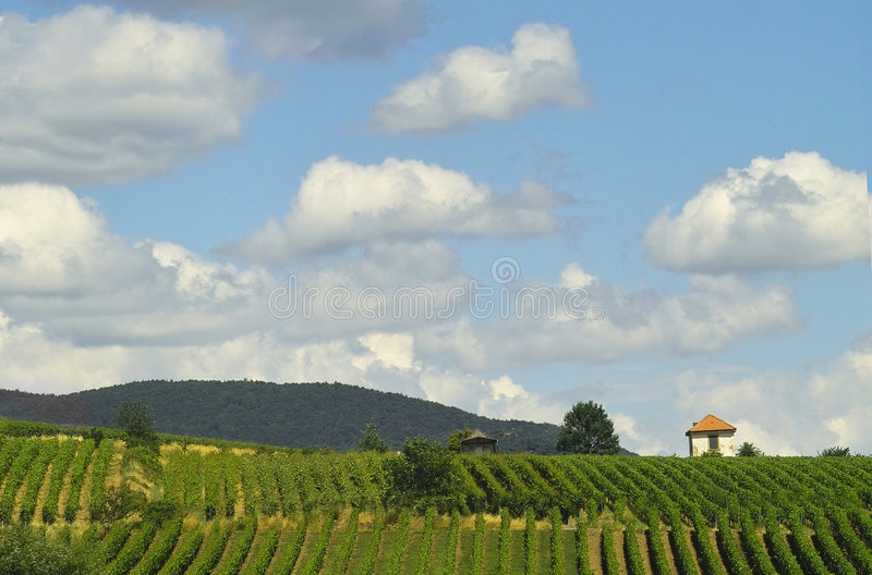 Download Vineyards and clouds stock image. Image of greenery, cloud - 200967