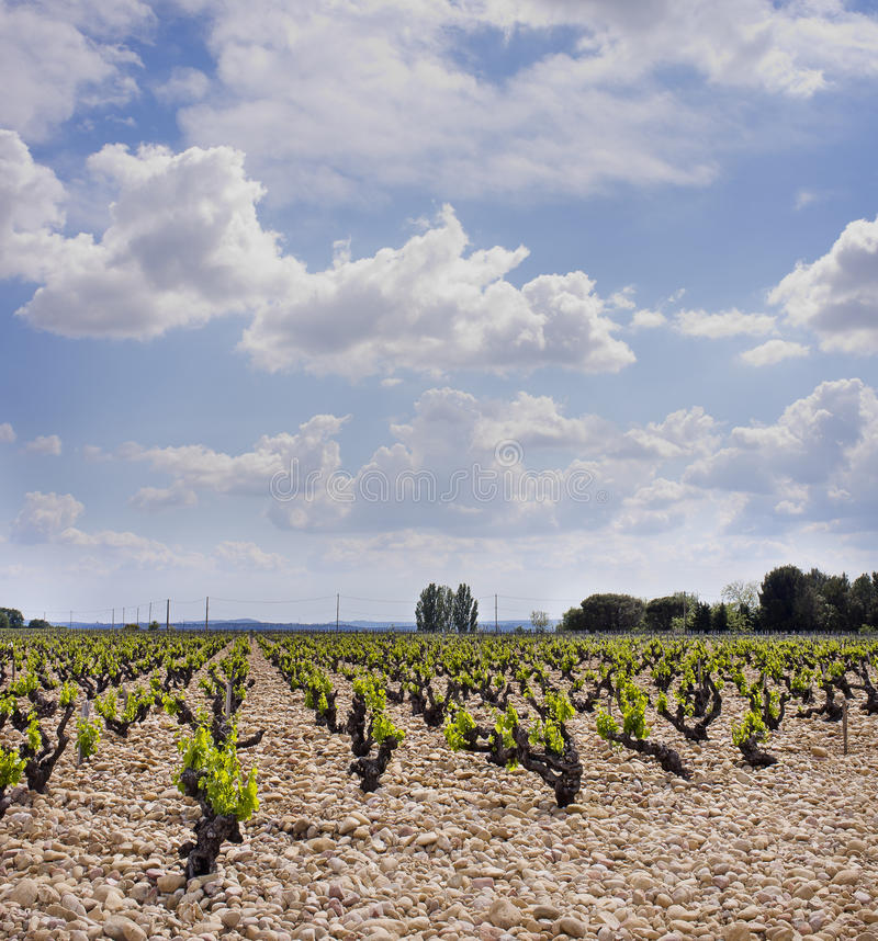 Vineyards, Cotes du Rhone Wine Country, France royalty free stock photos