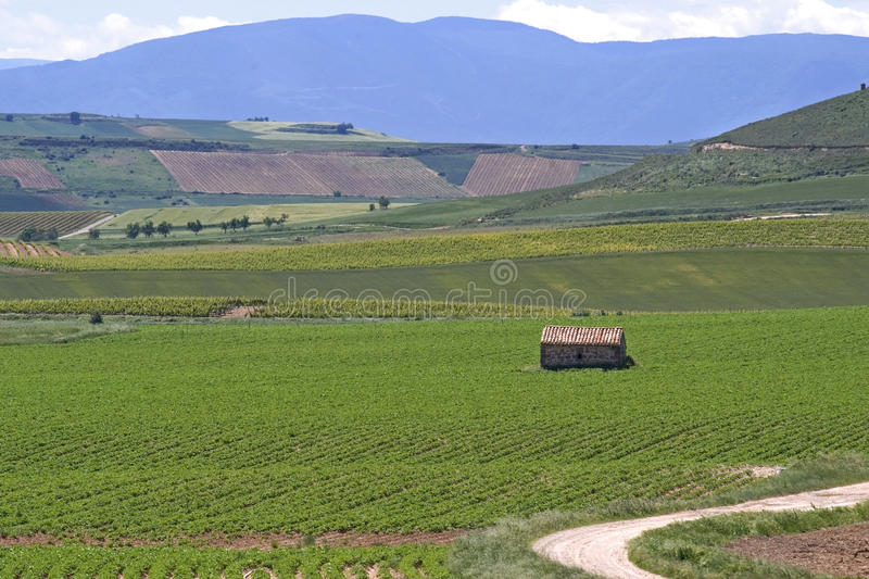 Vineyards in the countryside of La Rioja, Spain royalty free stock images