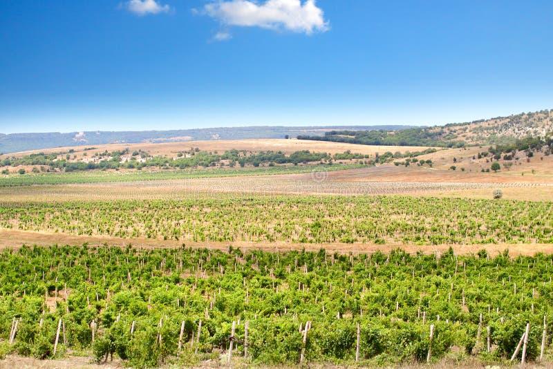 The vineyards of Crimea