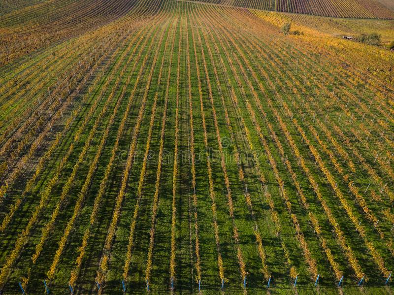 Vineyards in Czech Moravia, aerial drone view royalty free stock photography