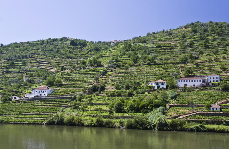 Vineyards of the Douro Valley. Landscape in Douro Valley showing the vineyards of the Port Wine royalty free stock image