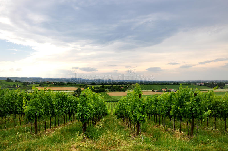 Vineyards and fields