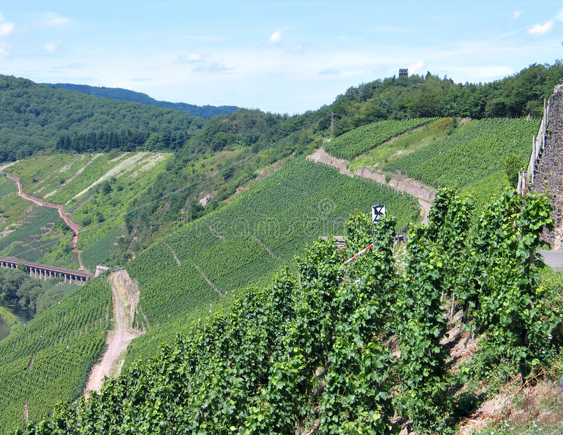 Vineyards fields in the Mosel Germany. Vineyards grapes fields on the hills in the area of Mosel Germany royalty free stock images
