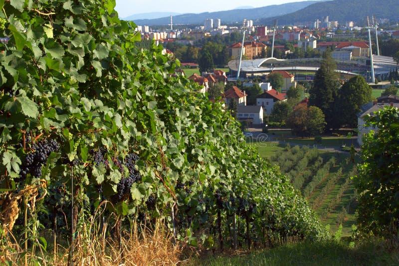 Vineyards And Football Stadium Maribor, Slovenia stock image