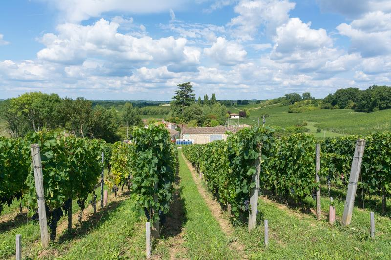 Vineyards in France royalty free stock photography