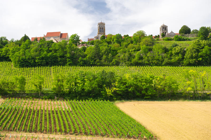 Vineyards in French Burgundy. Vineyards against the hill in French Burgundy royalty free stock photos