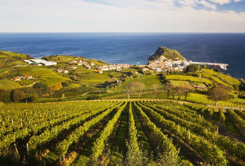 Vineyards in Getaria, Gipuzkoa royalty free stock photography