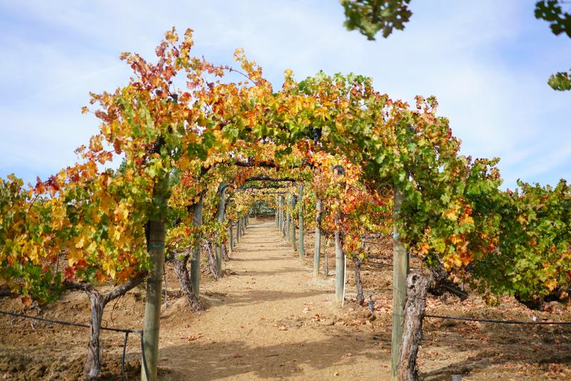 Vineyard Arch in Autumn stock images
