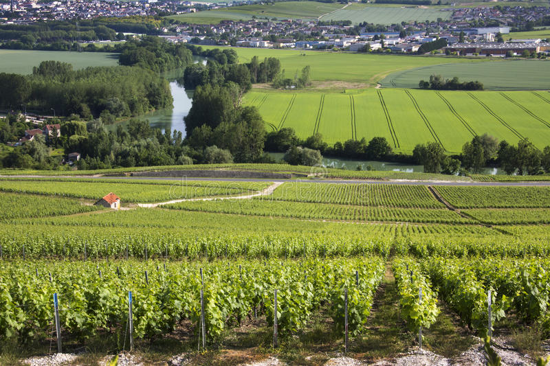 Download Vineyards - Hautvillers Near Reims - France Stock Photo - Image of scenic, entrepot: 31048462