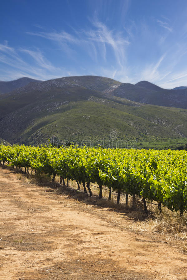 Download Vineyards With Hills And Cloudy Blue Sky Stock Image - Image: 27870469