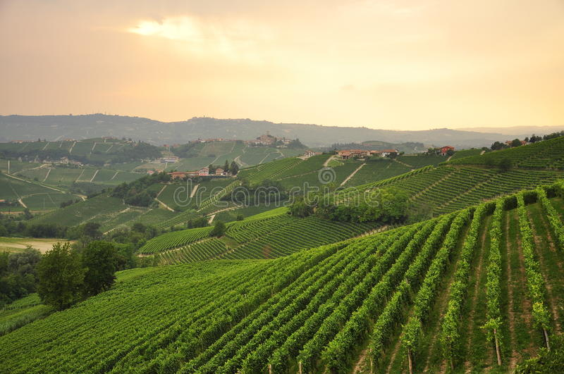 Vineyard and hills of the Langhe region. Piemonte, Italy. Langhe, the main Piedmont wine producing area. Barolo and Barbaresco wine grape growing area. Unesco royalty free stock photography