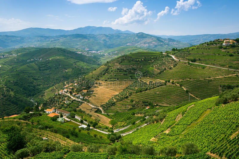 Vineyards on a hills. Panorama of the Douro Valley. Vineyards on a hills. Panorama of the Douro Valley, Portugal stock photo