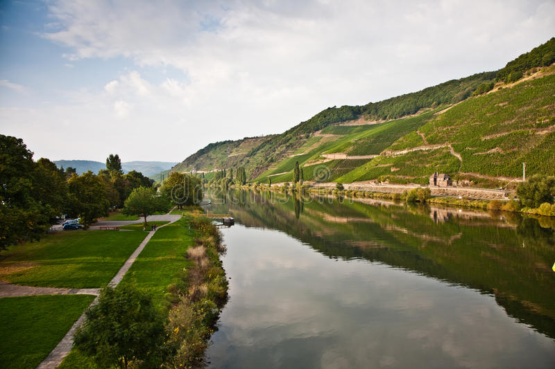 Vineyards at the hills of the romantic river Mosel edge in summer with fresh grapes and reflection in the river royalty free stock photos