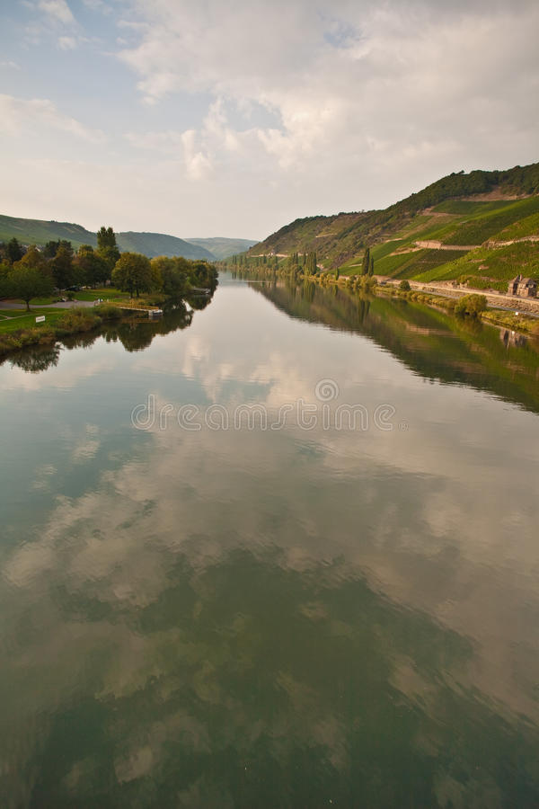 Vineyards at the hills of the romantic river Mosel edge in summer with fresh grapes and reflection in the river. View to the river mosel with vineyards at the stock images