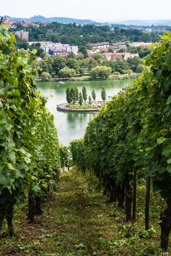 Free Vineyards In Stuttgart Royalty Free Stock Photos - 33529248