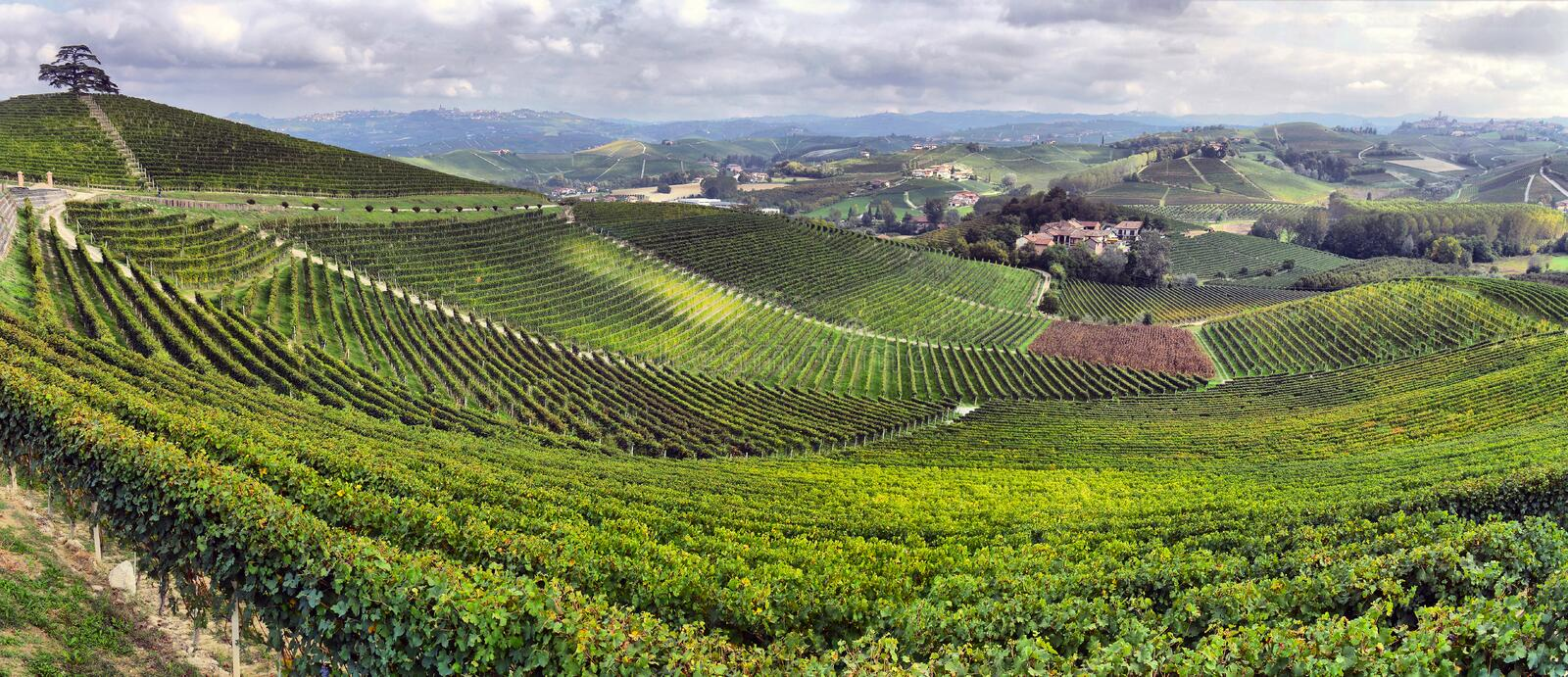 Download Vineyards in Italy stock photo. Image of green, nature - 35371822