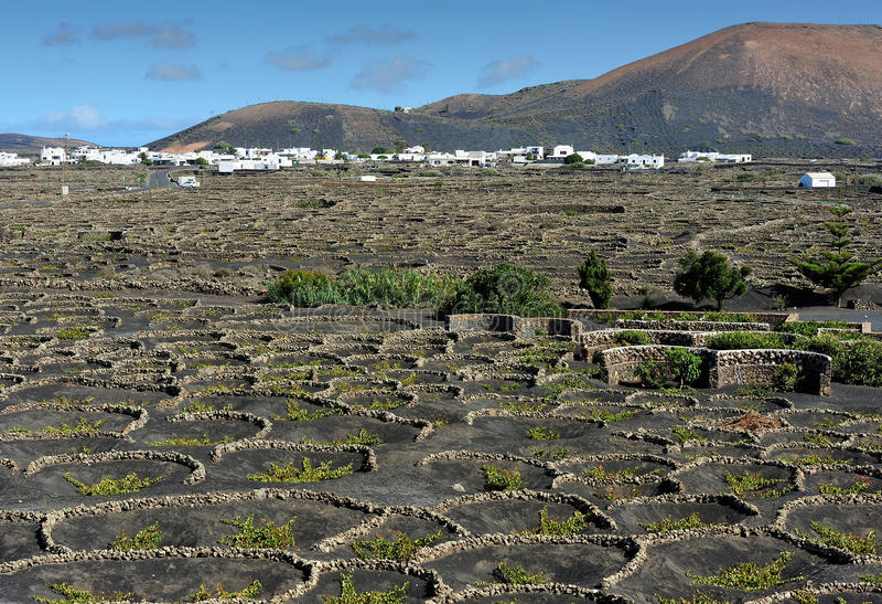 Vineyards at La Geria Valley, Lanzarote Island, Canary Islands,. Vineyards on black volcanic sand at La Geria Valley, Lanzarote Island, Canary Islands, Spain royalty free stock photo