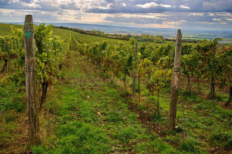 Vineyards landscape stock images