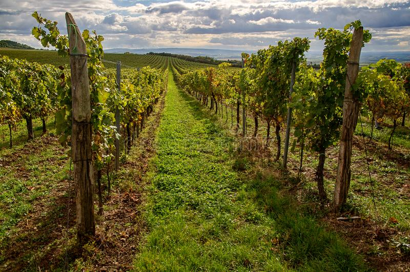 Vineyards landscape stock image