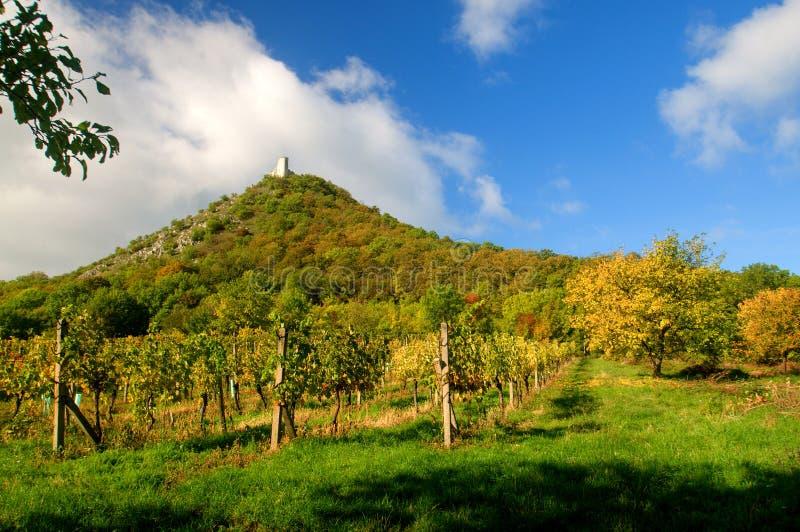 Vineyards landscape stock photography