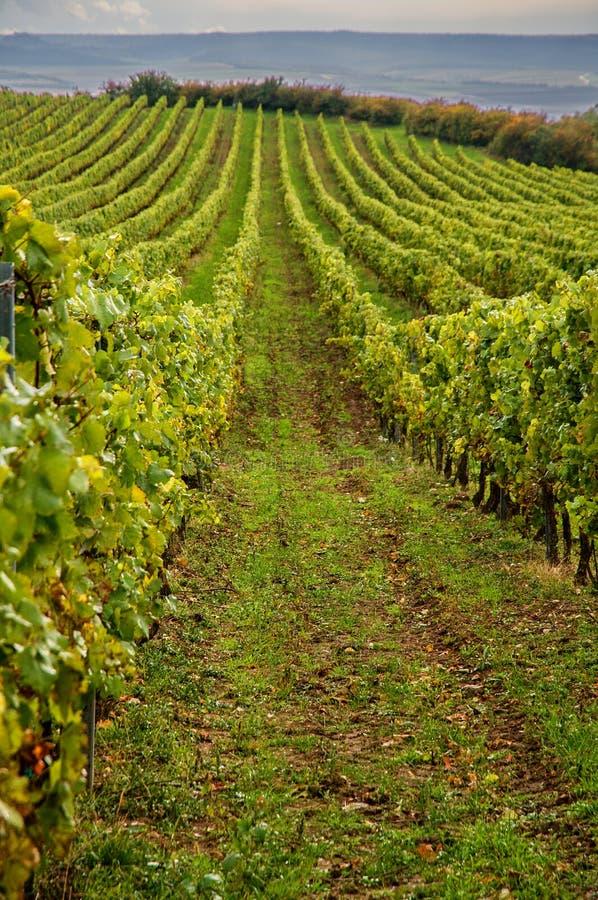 Vineyards landscape royalty free stock photo