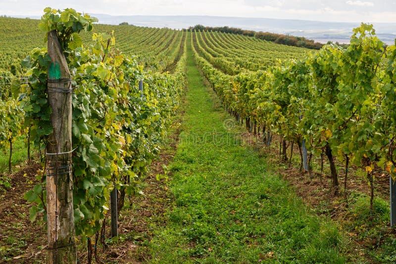 Vineyards landscape royalty free stock images