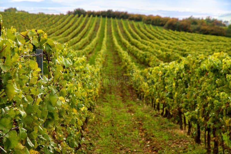 Vineyards landscape stock photos