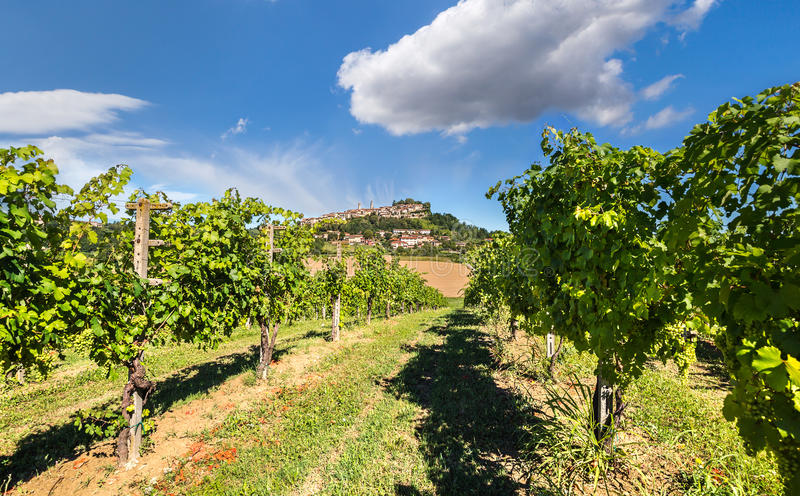 Vineyards of Langhe, Piedmont. royalty free stock images