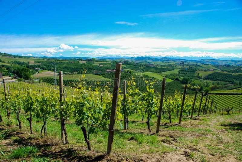 Vineyards of Langhe, Piedmont - Italy. View of Langhe hills with vineyards and the Alps mountains in the background, Piedmont - Italy stock image