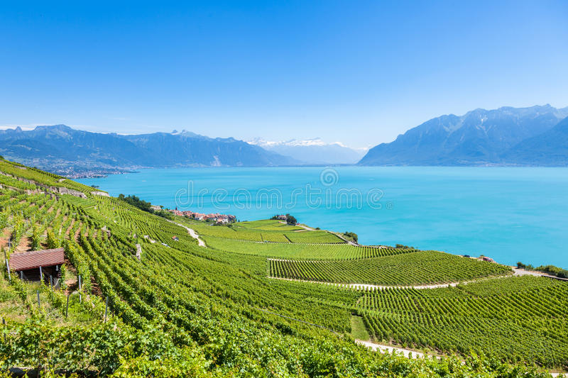 Vineyards in Lavaux region - Terrasses de Lavaux terraces, Switz stock image