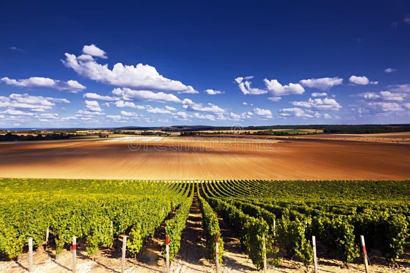 Vineyards layer stock photo
