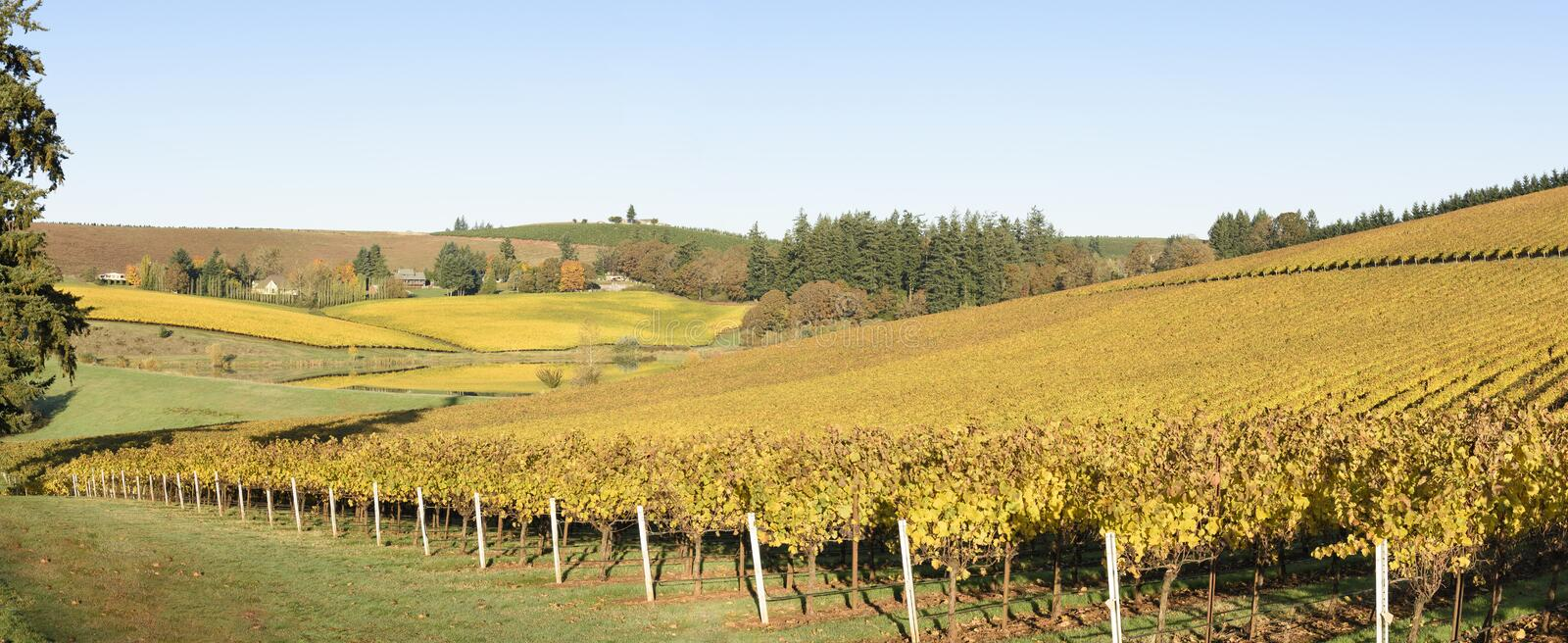 Fall Morning Colors of Vineyards in the Mid Willamette Valley, Marion County, Western Oregon. Vineyards in the Mid Willamette Valley stock image