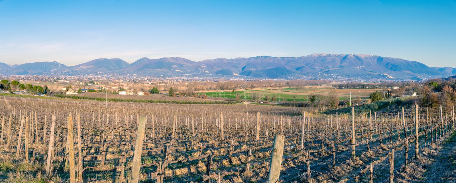 The vineyards of Montefalco, Umbria, Italy royalty free stock image