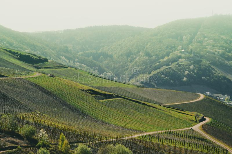Vineyards of the Mosel valley stock photos
